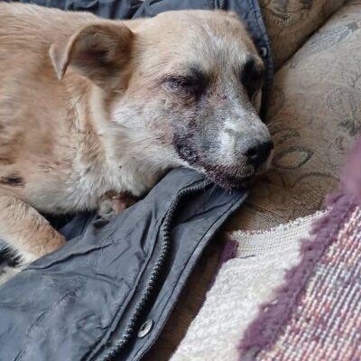 Живодер из Тараза выколол глаза собаке и обезглавил ее щенят. ВИДЕО